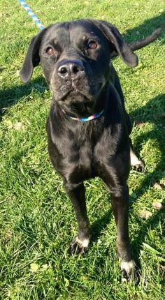 """ADOPTED!!! SWEET GIRL """"CASSANDRA"""" KENNEL # 5 (sweetiepie) is waiting for love & TLC! LORAIN COUNTY OHIO...  https://www.petfinder.com/petdetail/30843310/"""