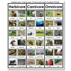 Herbivore, Carnivore or Omnivore Sorting Game