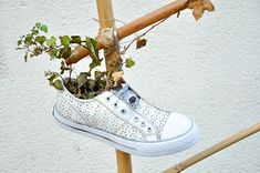 Daily perspectives: Decorative plimsoll with ivy