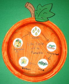 pumpkin life cycle.