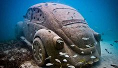 Volkswagen bug at the Underwater Museum in Isla Mujeres. Beetle Bug, Vw Beetles, Beetle Juice, Abandoned Cars, Abandoned Places, Jason Decaires Taylor, Underwater Sculpture, Underwater Art, Kdf Wagen