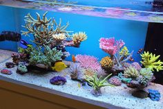 Reef in the Sky is a wonderful SPS reef aquarium built by Zeovit forum user 'V1...rotate' which was just nominated by his low-nutrient-system-loving peers
