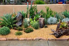 petit jardin sec aménagé avec des succulentes et des roches et décoré de gravier