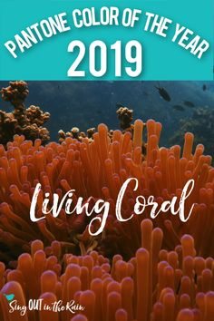 The 2019 Pantone Color of the year is Living Coral. So much of fashion and decor is determined each year by this color.  Will definitely be seen in many weddings as the year goes on.  #coloroftheyear #livingcoral