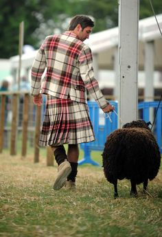 royal highland show | Media library - Royal Highland Show 2013