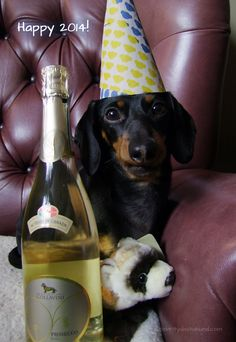 A Special New Year's Message – Crusoe the Celebrity Dachshund