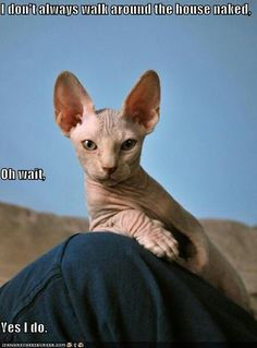 The most interesting sphinx-cat in the world