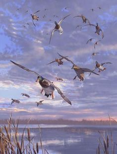 Waterfowl Paintings by Scot Storm 25