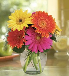 Gerbera Daisies Ranbow Stems) Hand-tied Bouquet- No Vase New Baby Flowers, Love Flowers, Fresh Flowers, Beautiful Flowers, Happy Flowers, Spring Flowers, White Flowers, Gerbera Daisy Centerpiece, Gerbera Bouquet