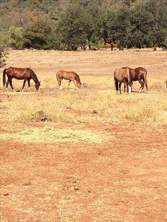 Wild Horse Sanctuary Manton, California