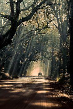 Mystic journey, Botany Bay Road on Edisto Island / South Carolina (by Michael Woloszynowicz).