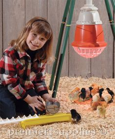Brooder Basics  One of the easiest ways to start raising chickens is by starting with day old chicks and a brooder.
