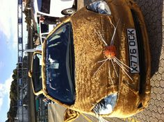 Our friends Random Rallies hamster car!