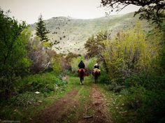 Horseback riding nature country horses