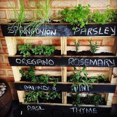 DYI Pallet Vertical Herb Garden: Most of us live in narrow and really limited living space and cannot afford a garden place. To feel the greenery and pure nature so close even you are living in a comp(Diy Garden Bed) Vertical Herb Gardens, Vertical Garden Diy, Outdoor Gardens, Vertical Planter, Small Gardens, Verticle Vegetable Garden, Vegetable Ideas, Outdoor Balcony, Outdoor Spaces