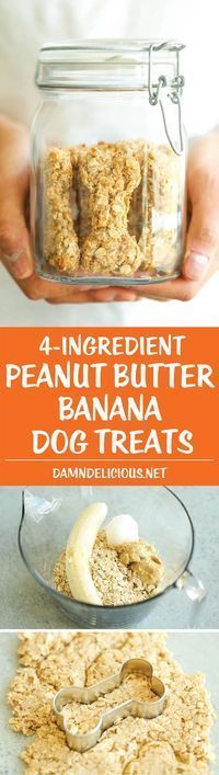 Peanut Butter Banana Dog Treats - All you need is 4 ingredients for these hypoallergenic treats! And the coconut oil makes these so HEALTHY for your pup! ~ Damn Delicious (no cookie coconut oil) Puppy Treats, Diy Dog Treats, Homemade Dog Treats, Dog Treat Recipes, Healthy Dog Treats, Dog Food Recipes, Homemade Recipe, Horse Treats, Food Tips