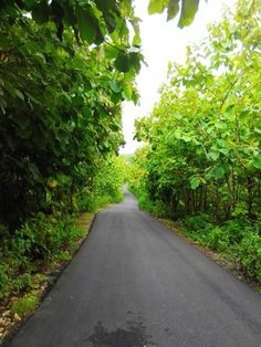 The green road, Jogjakarta, Indonesia