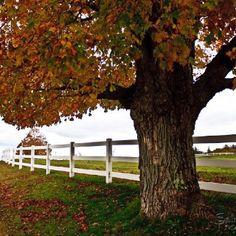 Fall - Salmon Falls Photography