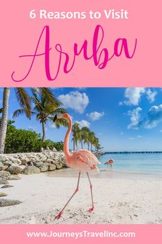 Here are some of our favorite reasons to visit Aruba on your next romantic getaway or upcoming vacation. If you love flamingos, romance, gorgeous weather and white sand beaches -- Aruba is for you. Read our latest blog to discover why Aruba should be on your bucket list #JourneysInc #flamingos #aruba #traveltips #travelblog