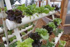 Hortas feitas com pallets e canos de PVC e uso de minhoca para fazer húmus estão no cardápio da estatal de extensão