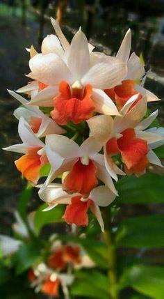 Orchids <3 ****