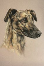Amazing animal portraits by Kate Brooks
