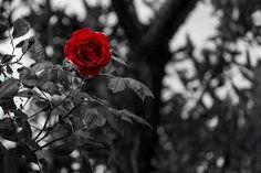 Image result for flower black white