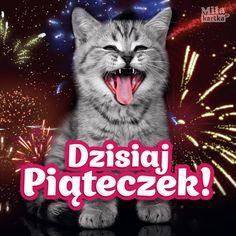 Dzisiaj Piątek #kotek #piątek #polska #cat #funny #kociak #kartki #śmieszne #memy Weekend Humor, Ok Boomer, Jaba, Cute Wallpapers, Good Morning, Lol, Dance, Funny, Pets