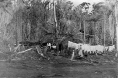 Scene in the bush showing a thatched hut, three people, and washing on a line.