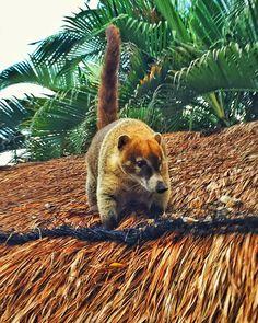 Cancun, Mexico © stoptaste.com / Dennis Lorenz  In Mexiko findet jeder seinen Lieblingsplatz, ob an einer der paradiesischen Küsten, zwischen alten Maya-Ruinen versteckt im Dschungel oder in einer der urbanen Metropolen wie Mexiko City. Erfahre mehr auf www.stoptaste.com