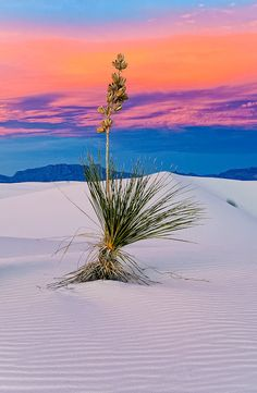 Incredible white sand #sunset
