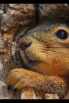 Crazy Squirrel   Via Gaijin Crafter