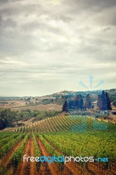 Free art print of Italy, Tuscany in Autumn, stormy clouds sky and vineyard. Get up to 10 Gallery-Quality Art Prints for Free. Grape Vineyard, Italy Images, Italy Art, Free Art Prints, Growing Vegetables, Tuscany, Royalty Free Stock Photos, Clouds, Sky
