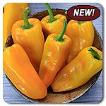 Organic Xanthi F1 Hybrid Sweet Pepper
