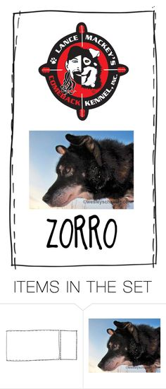 """The Grandfather of Most of the Team Was Zorro..Zorro Loved to Race & Could Be Counted on in Rough Situations…in 2008, He Was Injured When the Sled Was Hit at 70 MPH by a Drunk Snowmobiler…He Never Raced Again & Struggled Even to Walk"" by maggie-johnston ❤ liked on Polyvore featuring art"