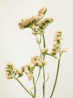 Strandflieder Tollwasblumenmachen.de Small Flowers, Dried Flowers, Narcisse, Lion Tattoo, Spring Flowers, Glass Vase, Bloom, Romantic, Colours