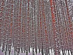 Зимнее фото – 924 фотографии