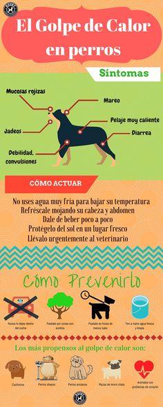 Infografía sobre el golpe de calor en perros