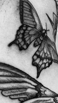 Butterfly dotwork
