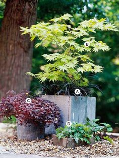 Garden RECIPES!!! Create Architectural Interest Use plant forms to create architectural interest in your landscape. Here, a fullmoon maple makes a wonderful contrast against mounding plants and its square container.
