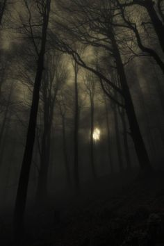 dark photography Season Of The Witch - A Southern Gothic Tale Gothic Aesthetic, Witch Aesthetic, Aesthetic Bedroom, Southern Gothic, Season Of The Witch, Dark Photography, Wedding Photography, Dark Places, Image Hd