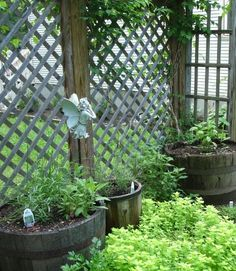 Herb garden in a raised bed with containers.