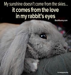 And a constantly caged rabbit will never show such love. Indeed, they will never experience it. Interact with your bunny. PLEASE... DON'T JAIL IT... and, call it caring for him/her.