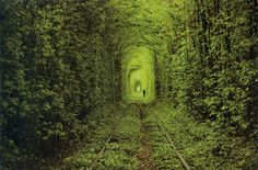 Tunnel-of-love-Ukraine - 15 Dreamiest Destinations Best Places To Vacation, Best Vacations, Places To See, Most Romantic Places, Wonderful Places, Beautiful Places, Tunnel Of Love Ukraine, Places Around The World, Around The Worlds