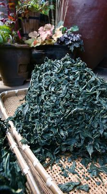 Drying freshly picked indigo from the field. Japanese Textile Workshops  日本のテキスタイル ワークショップ