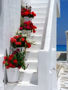 Red geraniums on a white stair