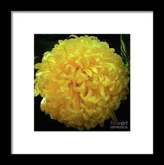 Golden Ball Framed Print by Jasna Dragun.  All framed prints are professionally printed, framed, assembled, and shipped within 3 - 4 business days and delivered ready-to-hang on your wall. Choose from multiple print sizes and hundreds of frame and mat options.