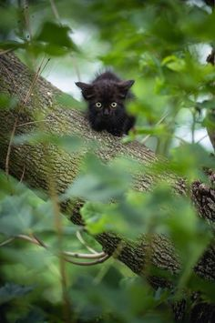 Black kitten in a tree
