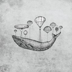 Whale.