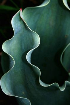 dark deep green color / botanical aesthetic / abstract plant photography / nature art / succulent macro / leaf close up / garden mood Patterns In Nature, Textures Patterns, Nature Pattern, Fotografia Macro, Natural Forms, Natural Curves, Organic Shapes, Organic Form, Shades Of Green